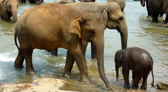 the orphanage had seven baby elephants