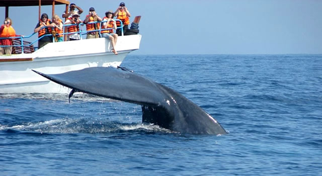 Trinco Whale Watching